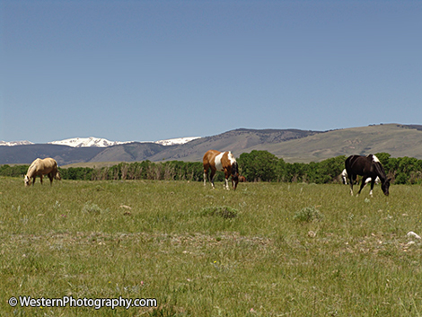 Horses in a field in front of the mountains
